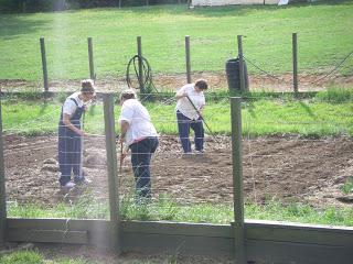 Planting, Growing